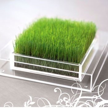 Grass For Your Home or Office Desk Planters Sustainable design